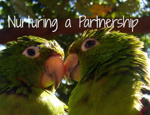 Nurturing a Partnership